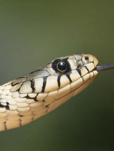 Serpent Linux os