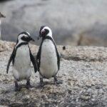 kernel linux terminologia inclusiva