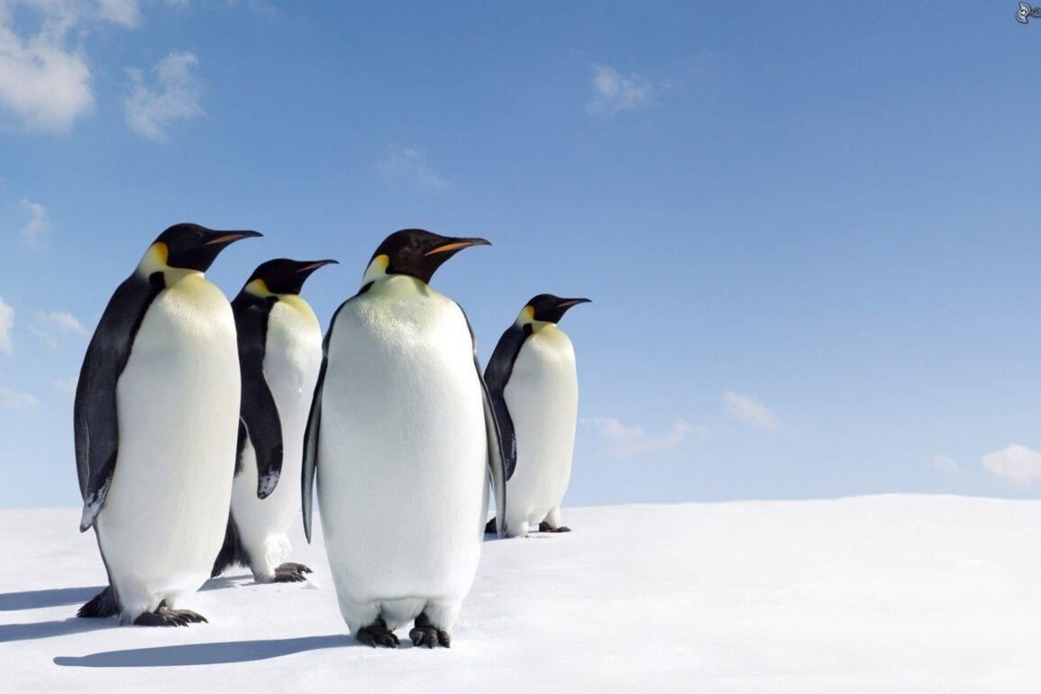 linux 5.9
