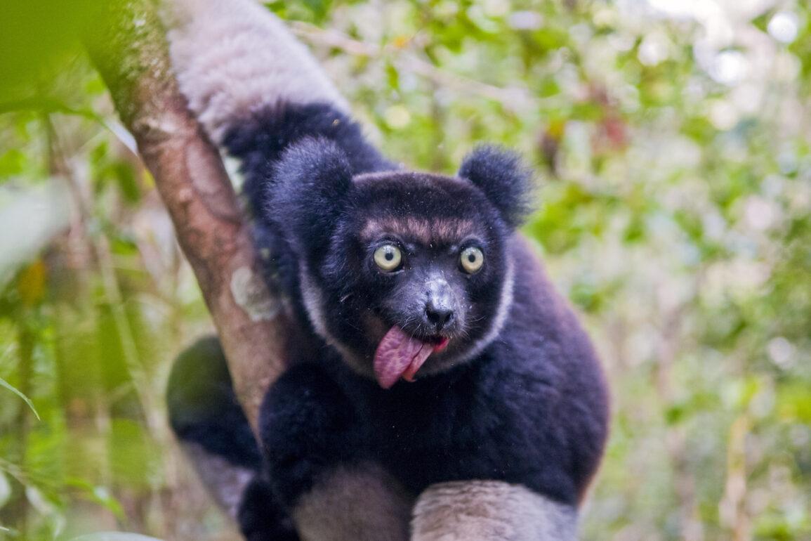Indri ubuntu 21.10