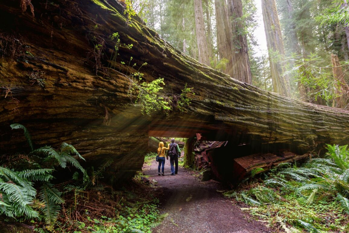 sequoia linux